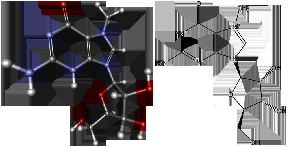 methylguanosine, protein synthesis, метилгуанозин, рибосома, рнк, синтез белка, трансляция